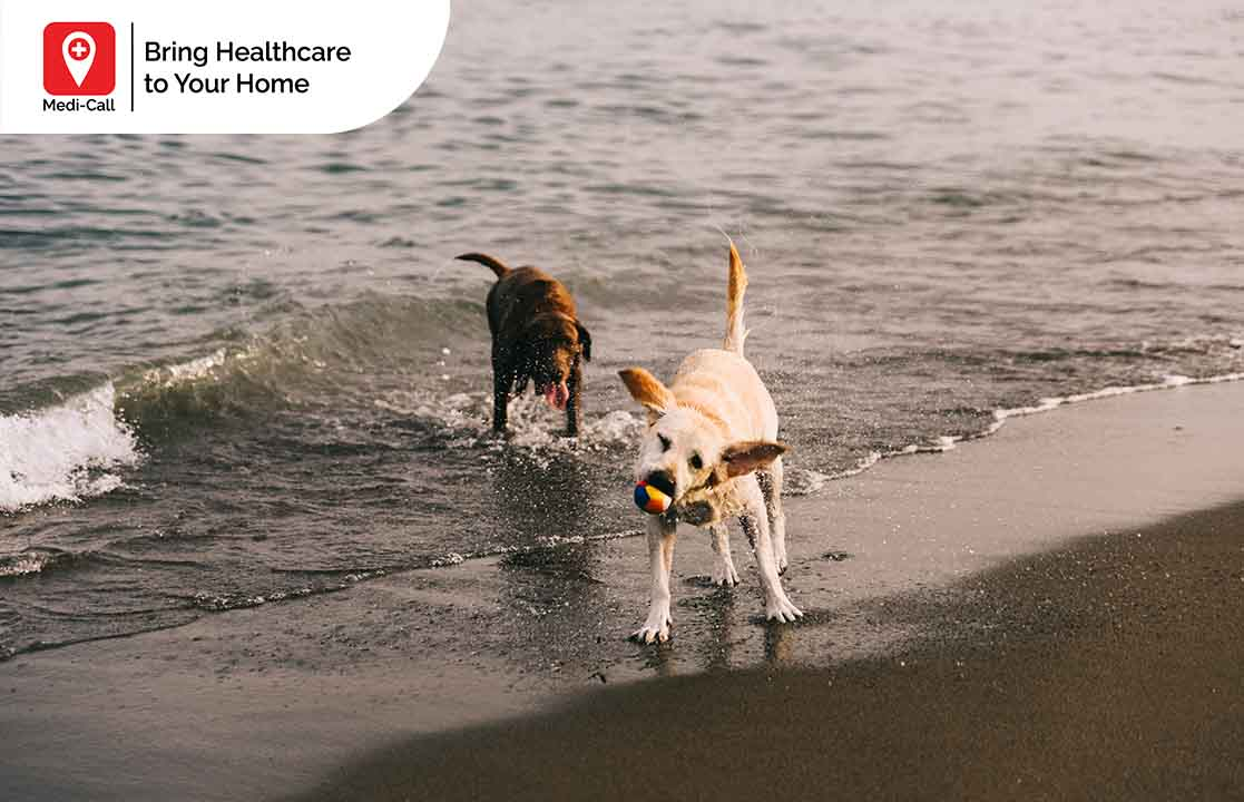 rabies vaccine in bali, medi-call, medicall, rabies vaccine, vaccination