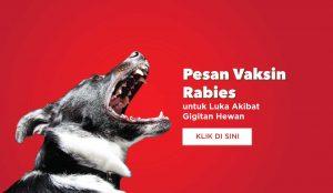 luka gigitan hewan, vaksin rabies, vaksin VAR, VAR, SAR, vaksin SAR, luka rabies, rabies, virus rabies, vaksin di rumah, vaksin rabies di rumah, medi-call, medicall